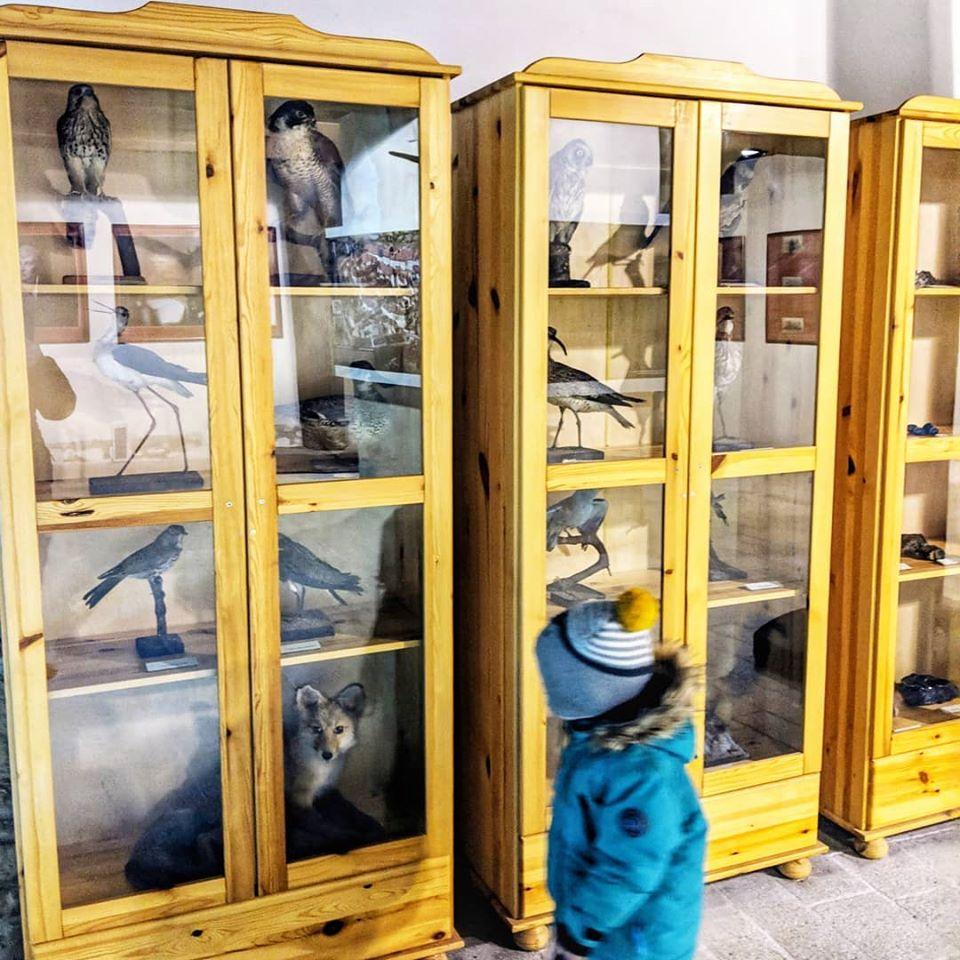 Expozice vycpaných zvířat na hradě Seeberg