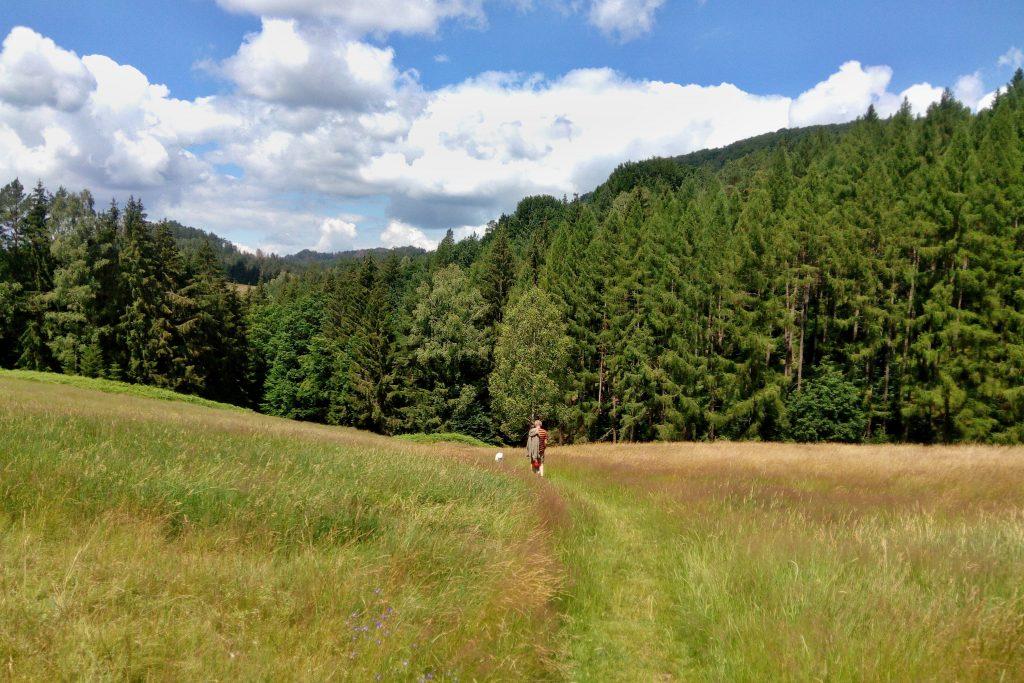 cesta z Jetřichovic k Pfeiferovu lesíku